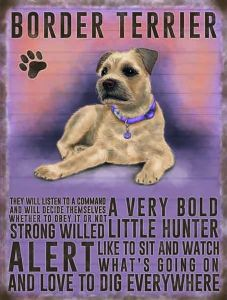 Border Terrier metal sign  200mm x 150mm (og)